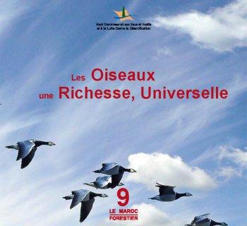 Les Oiseaux, une Richesse Universelle - Les Oiseaux au Maroc