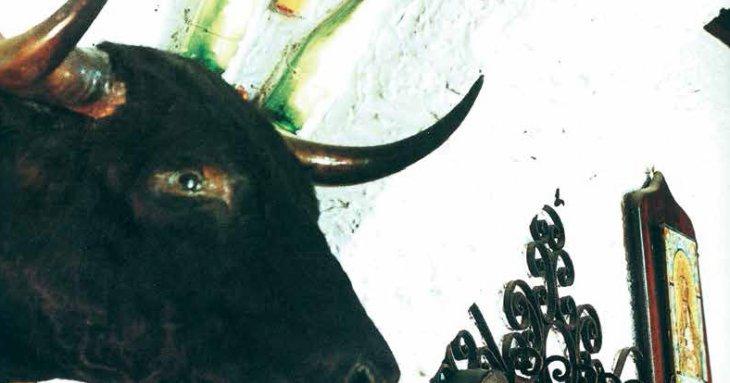 Une des trois têtes de taureaux accrochées au mur de la salle. Elles sont tombées dans les Arènes de Casablanca.