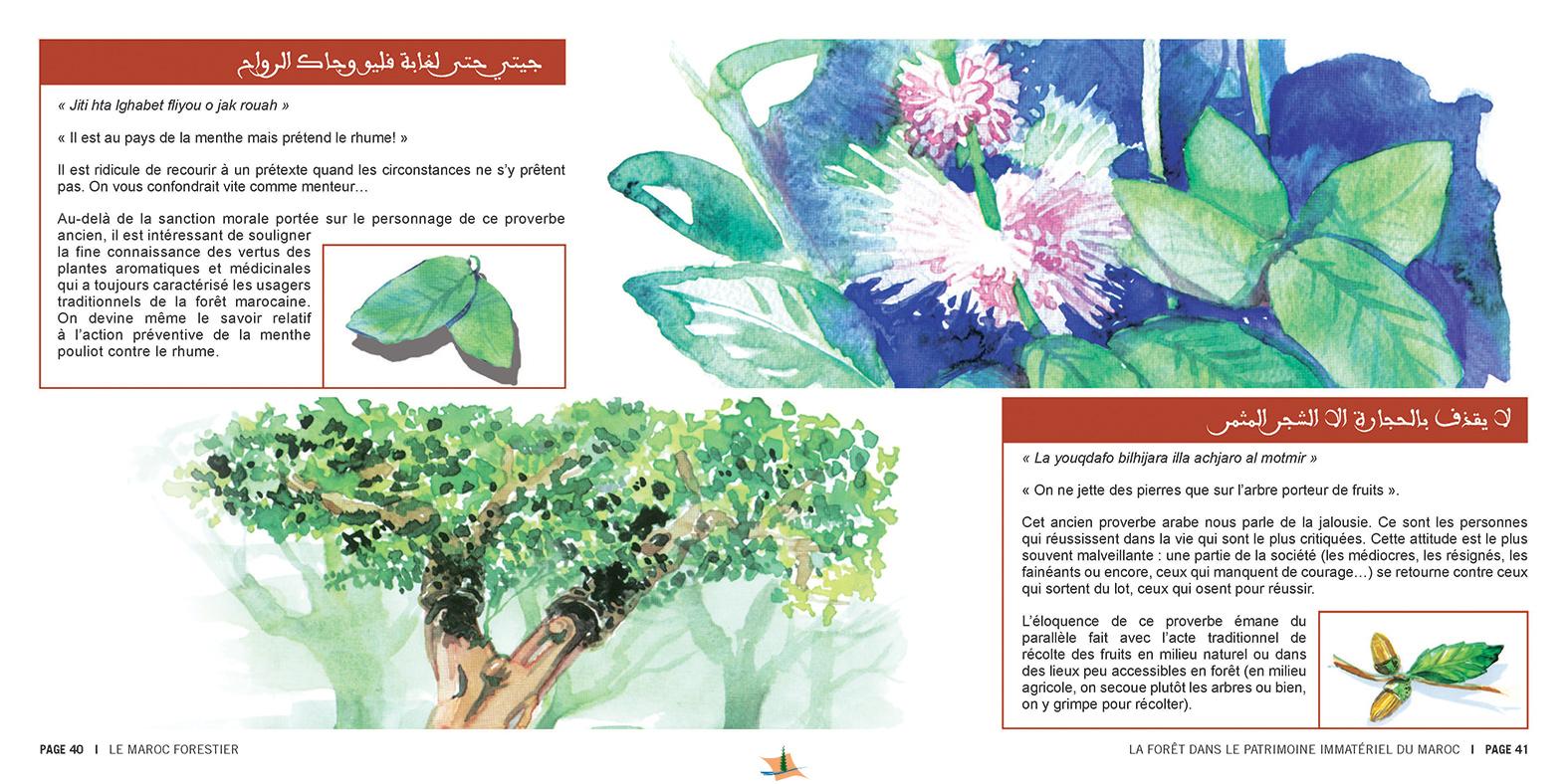 marocForestierChp8P3-03