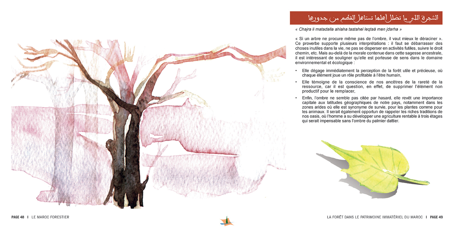marocForestierChp8P3-07