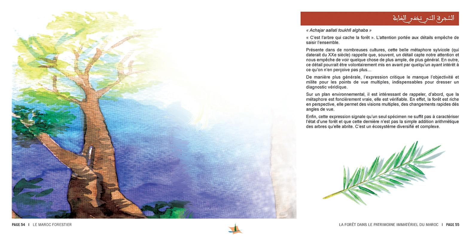 marocForestierChp8P3-10