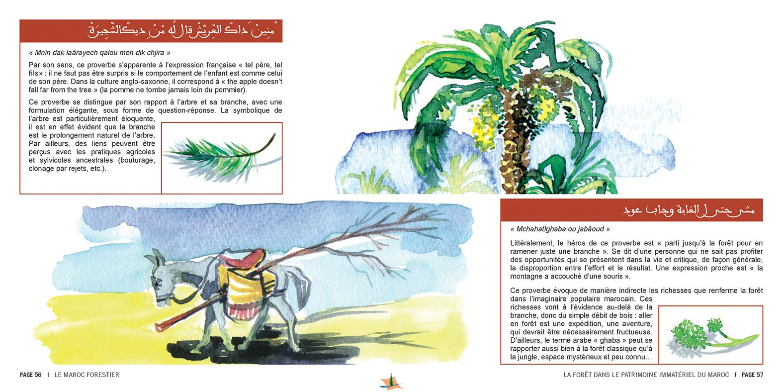 marocForestierChp8P3-11