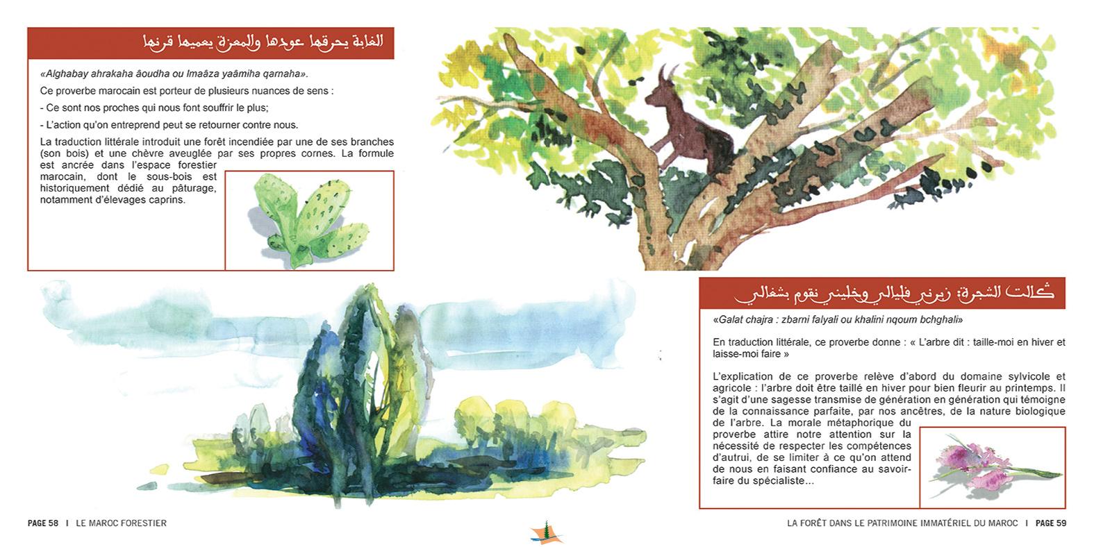 marocForestierChp8P3-12