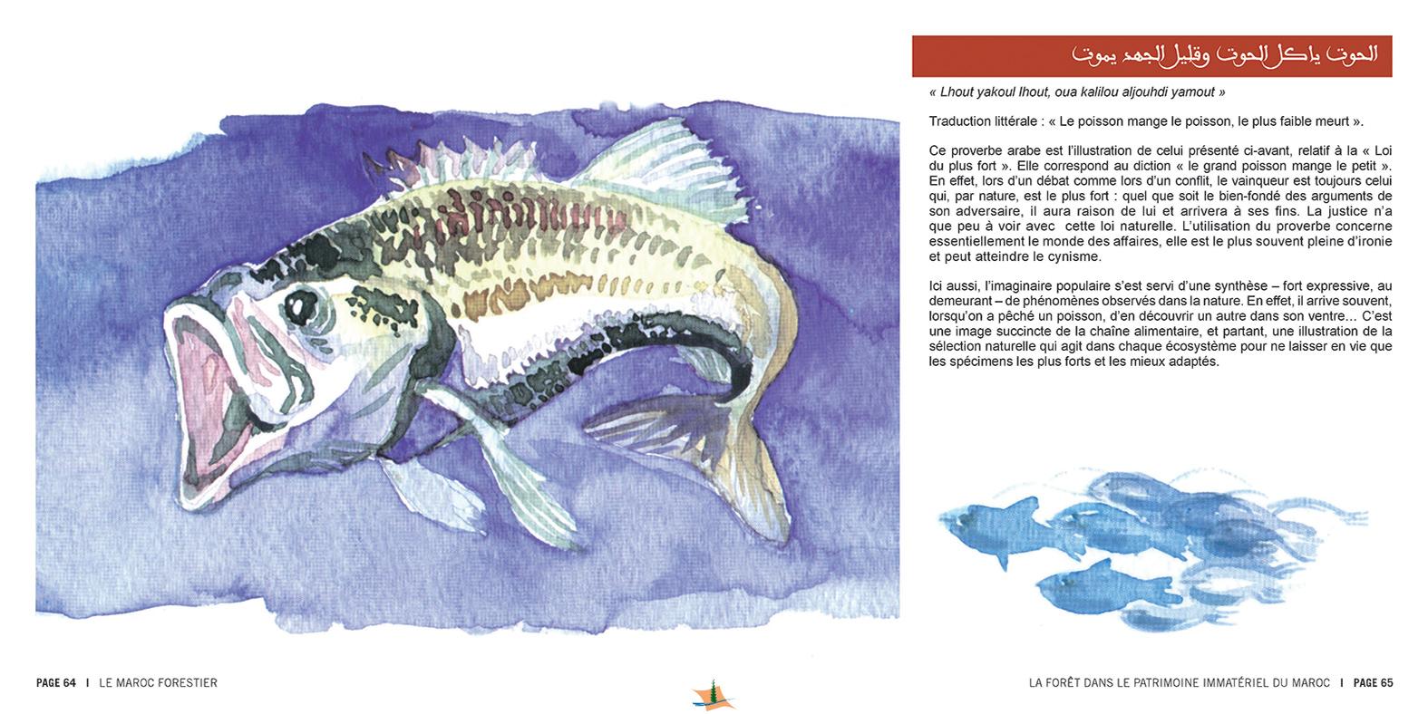 marocForestierChp8P3-15