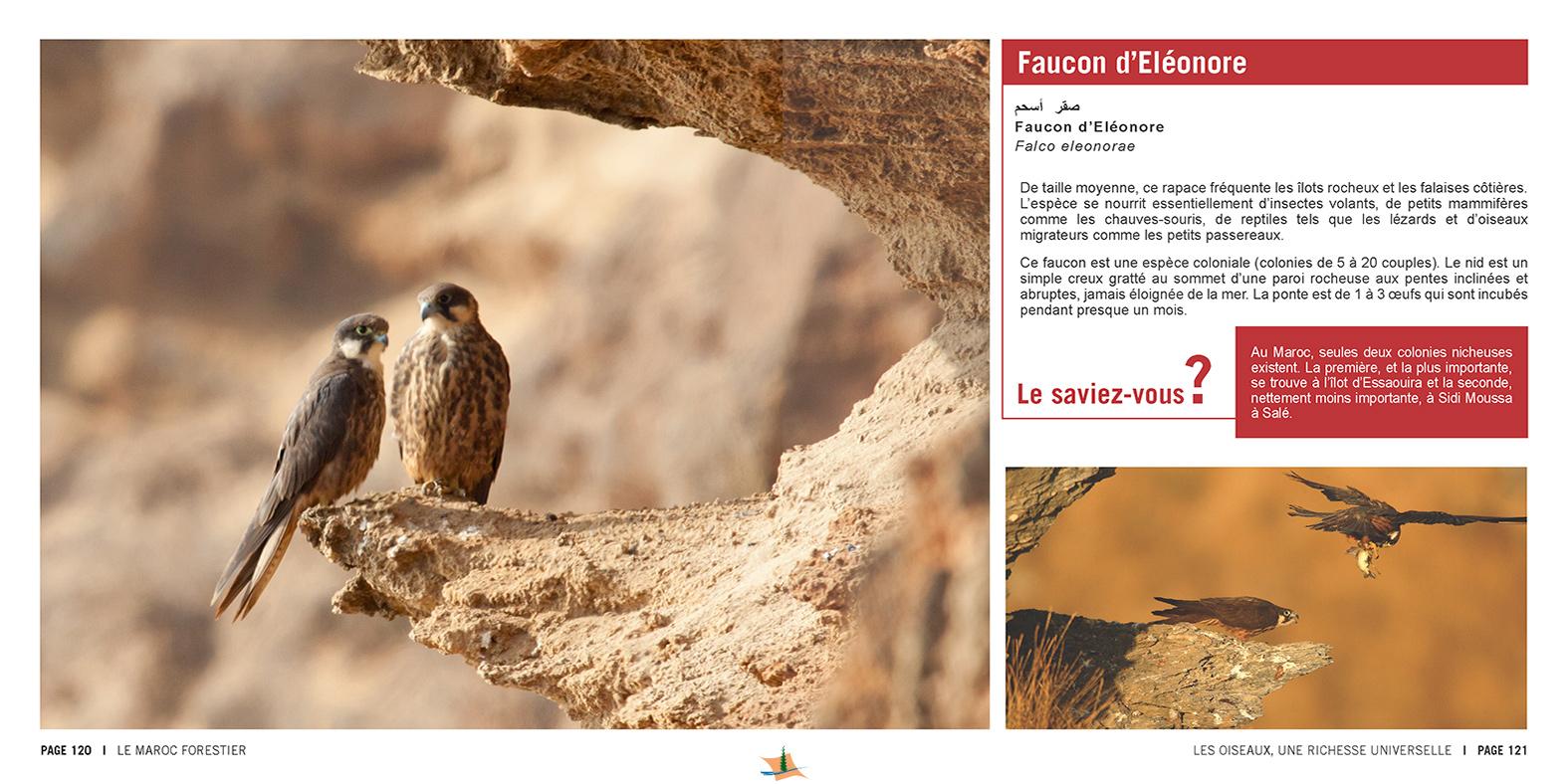 marocForestierChp9P5-08