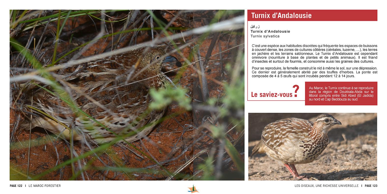 marocForestierChp9P5-09