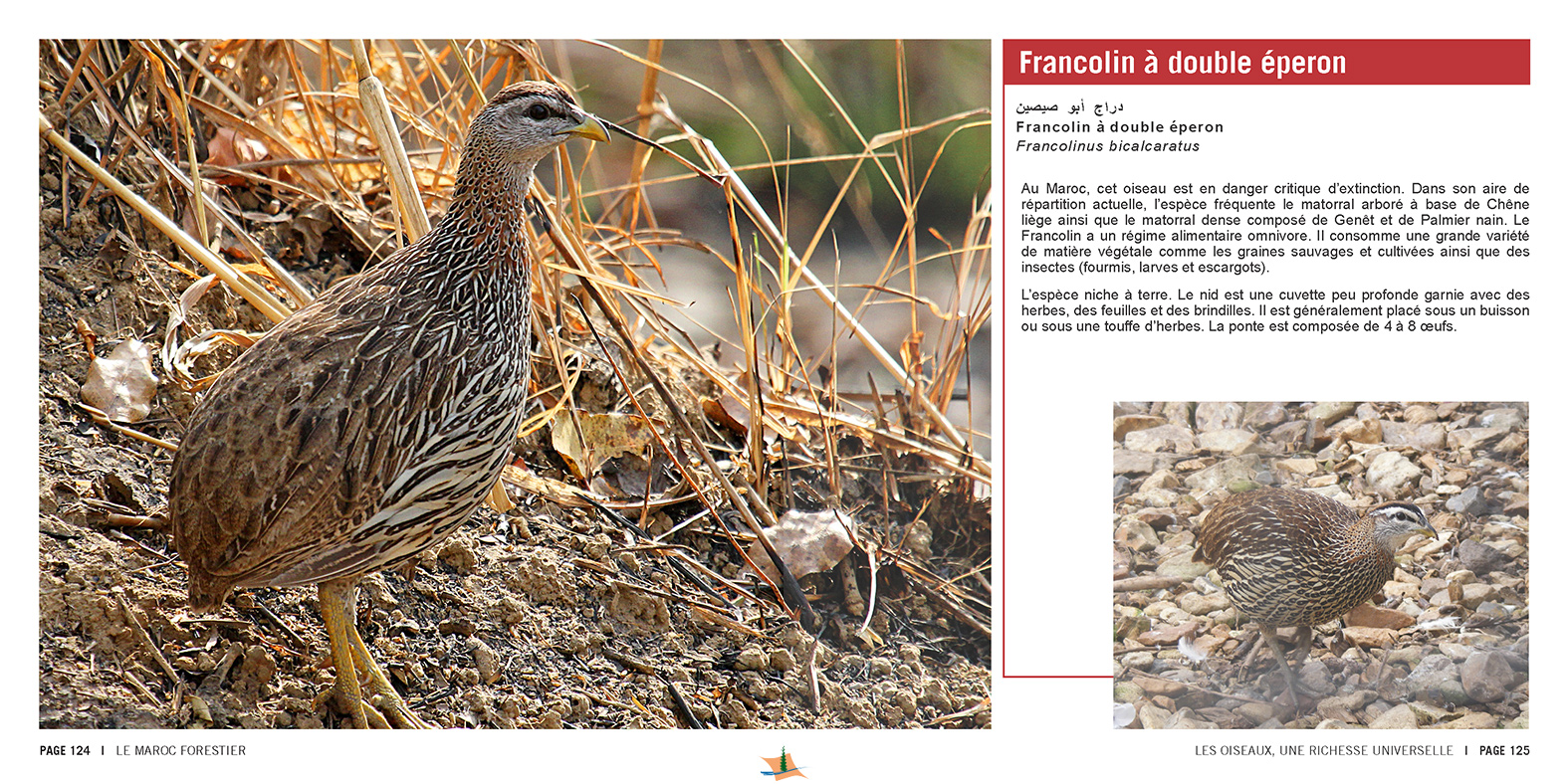 marocForestierChp9P5-10