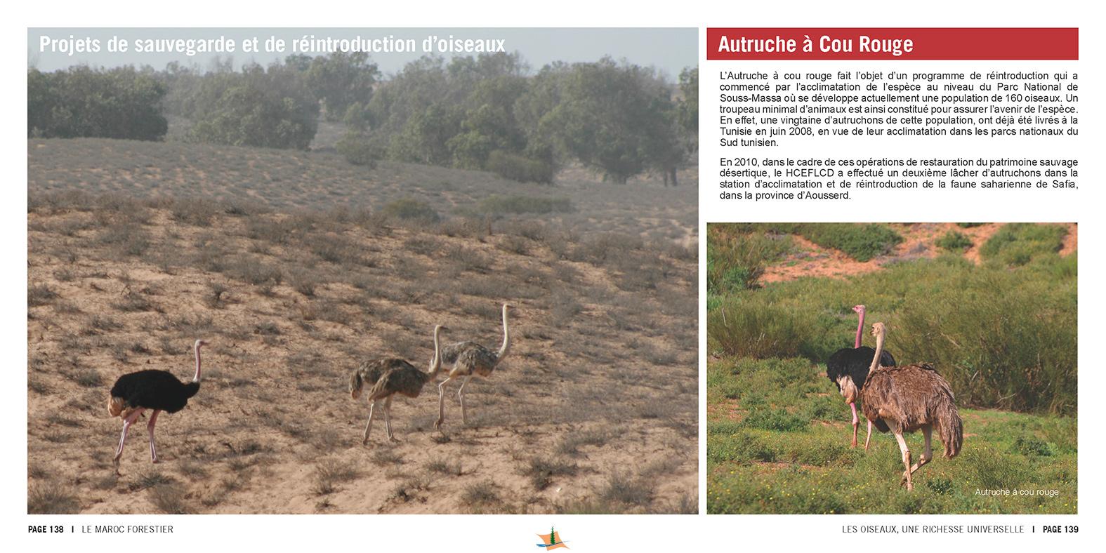 marocForestierChp9P5-17