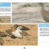 La Chasse et la Faune Cynégétique au Maroc - Espèces d'Oiseaux Protégées pouvant être valorisées par la chasse
