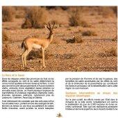 marocForestierChp4P1-06
