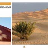 marocForestierChp4P3-05