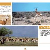 marocForestierChp4P4-02