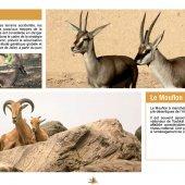 marocForestierChp4P4-03