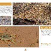 marocForestierChp4P4-07