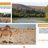 marocForestierChp4P6-02