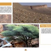 marocForestierChp4P7-03
