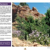 marocForestierChp6P1-11