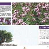 marocForestierChp6P2-03