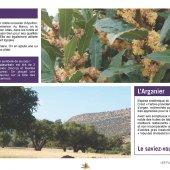 marocForestierChp6P2-04