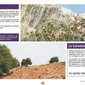 marocForestierChp6P2-05
