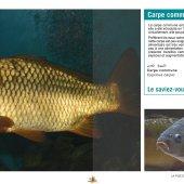 marocForestierChp7P5-15
