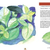 marocForestierChp8P3-16