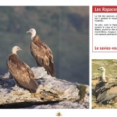 marocForestierChp9P2-09