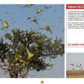 marocForestierChp9P3-06