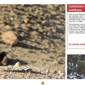 marocForestierChp9P4-06
