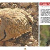 marocForestierChp9P5-02