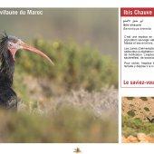 marocForestierChp9P5-04