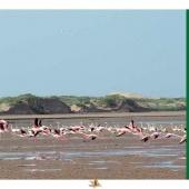 Les Aires protégées du Maroc - Les Parcs Nationaux-1