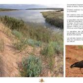 Les Aires protégées du Maroc - Les Parcs Nationaux-6