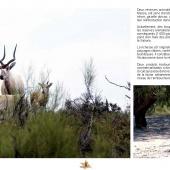Les Aires protégées du Maroc - Les Parcs Nationaux-7